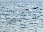 foto of kayak  - Young men compete to float in kayaking - JPG