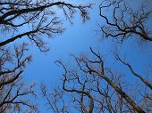 stock photo of dead plant  - Dead trees on a background of blue sky who died as a result of bad environment - JPG
