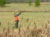 picture of ringneck  - youth hunter trying to take down quail in flight - JPG