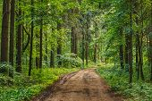 Empty Lane, Path, Way in summer forest poster