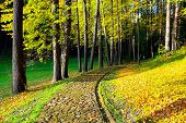 picture of yellow flower  - rural road in the forest - JPG
