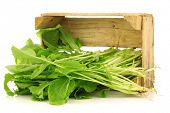 image of turnip greens  - fresh turnip tops  - JPG
