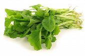 stock photo of turnips  - fresh turnip tops  - JPG