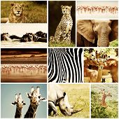 African wild animals safari collage, large group of fauna diversity at African continent, natural th