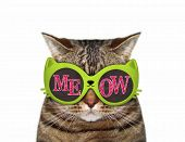The Cat Wears Green Sunglasses With Inscription  Meow . White Background. Isolated. poster