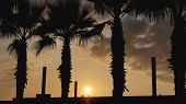 Sunset Landscape. Beach Sunset. Palm Trees Silhouette On Sunset Tropical Beach, Summer poster