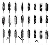 Wheat Ears Icons. Organic Agriculture Cereals Harvest. Stalk Grain Rice And Wheat, Corn And Oats, Ba poster