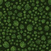 Beautiful Seamless Pattern With Monstera. Monstera For Decorative Design. Green Natural Plant. Jungl poster