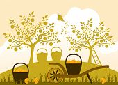 image of hand-barrow  - vector wheelbarrow and baskets of apples in apple orchard - JPG