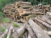 Tree Log Pile Landscape