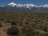 stock photo of sagebrush  - Sagebrush and spring wildflowers with the Sierra Nevada Mountains - JPG