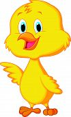 foto of bluebird  - Vector illustration of Cute baby chicken cartoon - JPG