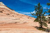 picture of pinky  - Pinky rocky waves in Zion National Park USA - JPG
