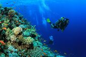 stock photo of biodiversity  - Scuba Diver exploring coral reef - JPG