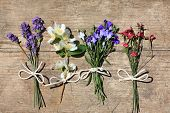 picture of lobelia  - Various flowers on the wooden rustic table - JPG