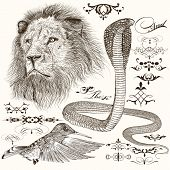 pic of tree snake  - Vector set of hand drawn detailed animals with calligraphic elements - JPG