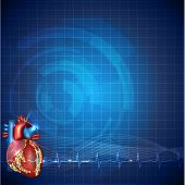 stock photo of atherosclerosis  - Cardiology technology background detailed human heart anatomy and normal cardiogram rhythm beautiful blue color design - JPG