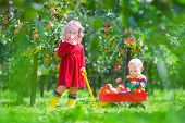 stock photo of hand-barrow  - Happy little children cute toddler girl and adorable funny baby boy playing together in a beautiful fruit garden eating apples having fun on a wheel barrow ride enjoying a warm autumn day outdoors - JPG