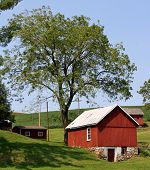 stock photo of walnut-tree  - An old springhouse rests under a black walnut tree on the farm where my dad grew up in Felton, Pennsylvania