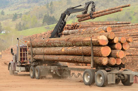 pic of logging truck  - A log truck delivers a load of logs to the log yard at a lumber processing mill that specializes in small logs - JPG