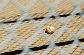 pic of little-league  - image of a baseball through the fence - JPG