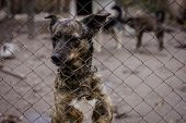 stock photo of begging dog  - sad dog in dog shelter in autumn