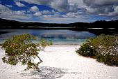 stock photo of mckenzie  - White sands at Lake McKenzie - JPG