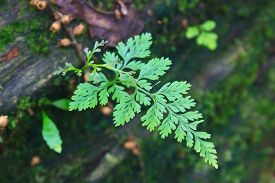 stock photo of fern  - Fern in the forest Forest Ferns and Fallen Log - JPG