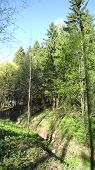pic of ravines  - Forest ravine spring grass and line of forest trees - JPG