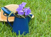 foto of petunia  - A straw hat behind a blue metal container filled with Mexican petunias - JPG