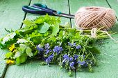 picture of plantain  - Medicinal herbs  - JPG