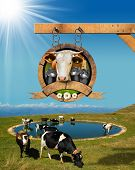 foto of mountain chain  - Dairy products sign with head of cow cans of milk green grass and daisy flowers - JPG