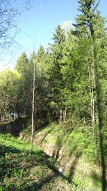 stock photo of ravines  - Forest ravine spring grass and line of forest trees - JPG