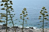 Coastal Plants And Sea Water poster