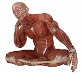 3d Illustration Male Body Without Skin, Anatomy And Muscles Isolated On White poster