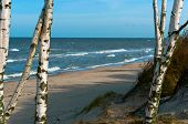 Birch Trees By The Sea, Seascape, A Small Wave Of The Sea, The Baltic Sea Waves, Cargo Ship At Sea poster