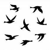 Vector Silhouette Of A Flock Of Birds. Set Of Black Isolated Flat Contours Of Flying Birds. Design E poster