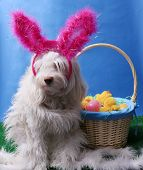 Easter Dog Portrait. A beautiful dog poses for her Easter photos in a studio. poster