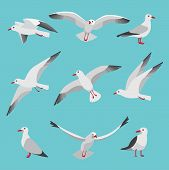 Set Illustrations Of Atlantic Seagulls In Cartoon Style. Pictures Of Birds In Different Poses. Seagu poster