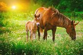 Beautiful Unicorns Mare And Foal In The Magical Forest Landscape At Sunset, Realistic Picture. Unico poster