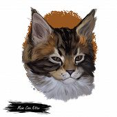 Maine Coon Kitten Watercolor Portrait Of Small Cat Digital Art Illustration. Realistic Drawing Of Ki poster