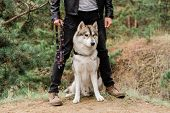 Cute and clever purebred husky dog sitting on footpath by legs of his owner while chilling in the fo poster