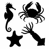 Sea Animals Icons Set. Seahorse, Starfish, Crab And Squid Graphic Signs Isolated On White Background poster
