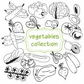 Vector Hand Drawn Collection Of Doodle Organic Vegetables Symbol, Doodles Of Fresh Food Background. poster