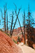 Hiker Woman In Bryce Canyon Hiking Looking And Enjoying View During Her Hike Wearing Hikers Backpack poster