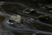 This Is A Long Exposure Photograph Of A Stone With Autumn Leaves On It In A Fast Flowwing Stream.  T poster