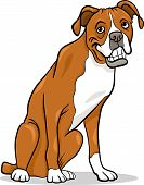 Boxer Purebred Dog Cartoon Illustration poster
