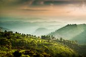 Landscape of the tea plantations in India, Kerala Munnar. (tilt shift lens)
