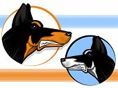 stock photo of doberman pinscher  - Doberman Pincer dog faces with circle icons - JPG