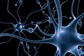 stock photo of nerve cell  - neurons - JPG